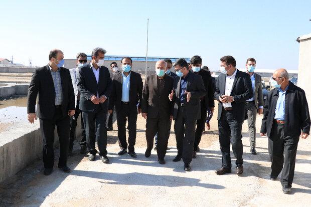 برخی تولیدکنندگان به خاطر ناملایمات از استان بوشهر خارج میشوند